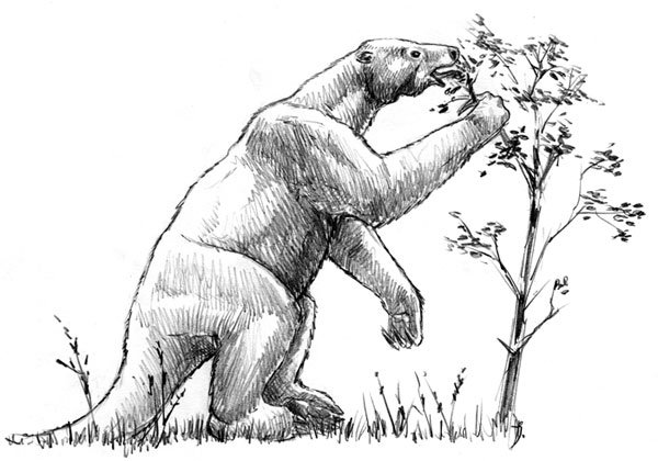 http://paleospot.com/illustrations/shasta-giant-sloth.jpg